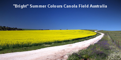 Bright Summer Colours Canola Field Australia