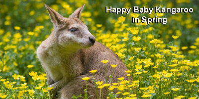 Happy Spring Kangaroo